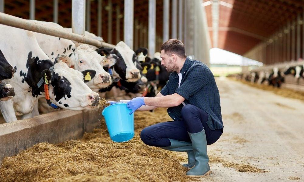 6 práticas sanitárias empregando o manejo racional de bovinos