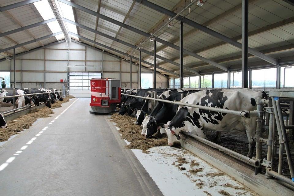 Como o estresse calórico impacta na produção leiteira